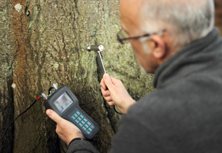 Testing Beech tree with IML micro hammer